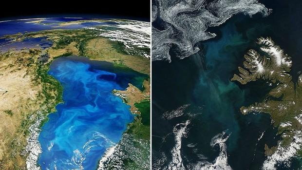Imagens captadas pelo satélite Aqua, da Nasa, evidenciam a presença de algas unicelulares brilhantes sobre o Mar Negro, que separa o Leste Europeu da Ásia Ocidental. Esses seres chamados 'cocolitóforos' são alguns dos que formam o fitoplâncton. (Foto: Nasa/GSFC/Modis)