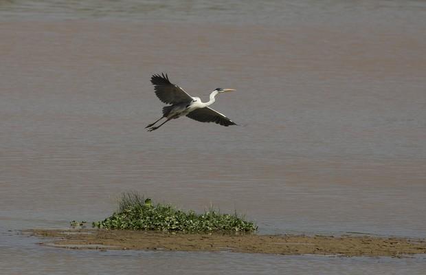 Pássaro voa em represa em Itu, que chegou a apenas 2% de sua capacidade. Itu é uma das cidades mais afetadas pela falta de água (Foto: Andre Penner/AP)