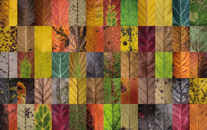 folhas outono 7 (Foto: Carola Becker)