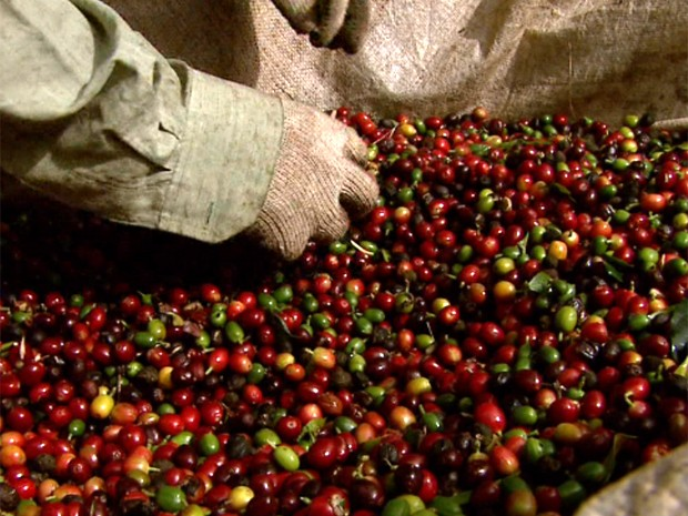 Os grãos de café são ensacados em máquinas e recebem lacre e código de barras (Foto: Reprodução/EPTV)