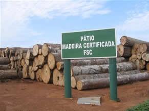 A certificação FSC considera questões socioambientais no manejo florestal (Foto: Divulgação)