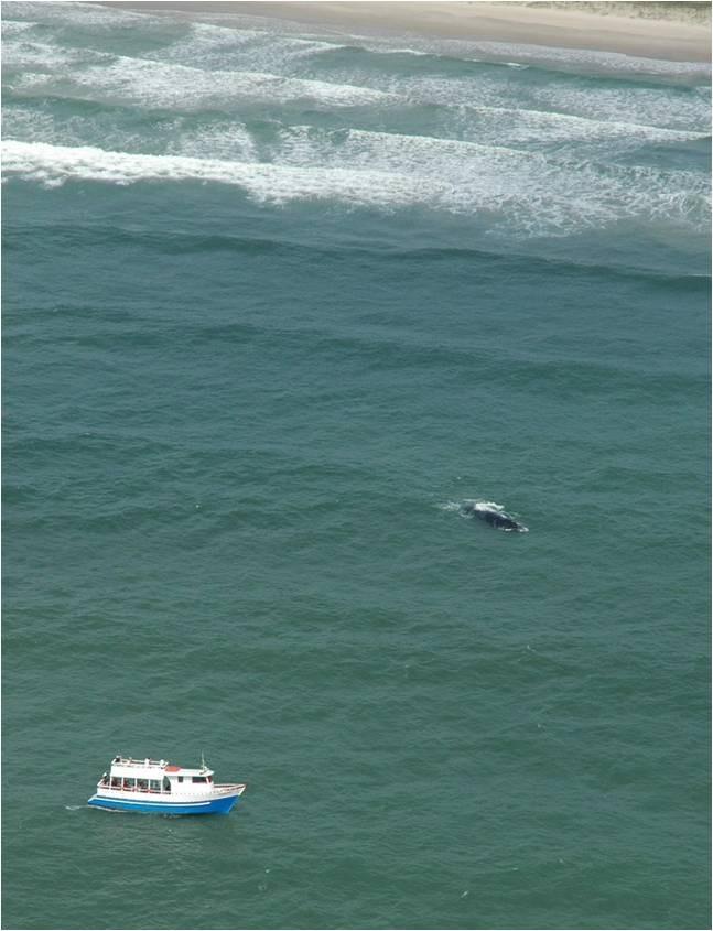Grupo turístico faz avistamento de baleia (Foto: PBF Brasil/Divulgação)