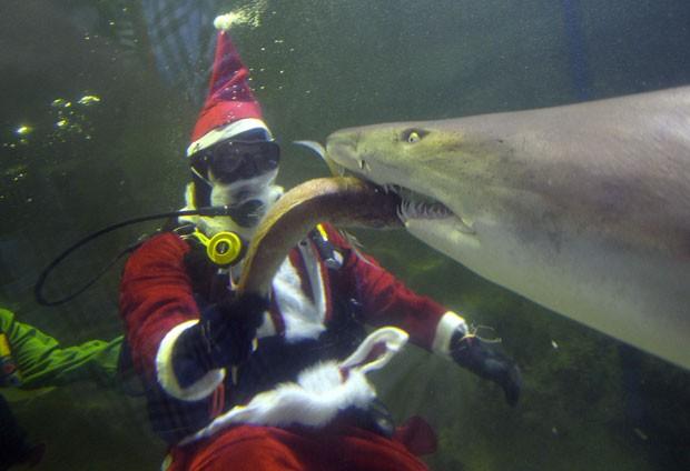 Um mergulhador fantasiado de Papai Noel foi fotografado alimentando um tubarão em um santuário de vida marinha em Sydney, na Austrália, nesta quarta-feira (18) (Foto: Saeed Khan/AFP)