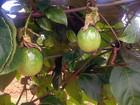 Circuito Frutifica  reúne produtores rurais (Assessoria/Divulgação)