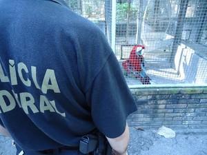 Animais eram comercializados ilegalmente após serem desviados. (Foto: Divulgação/Ascom Ibama)