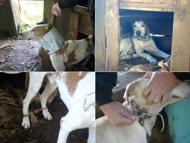 Vizinho do dono se comprometeu a cuidar dos animais. (Foto: Divulgação/Polícia Militar)