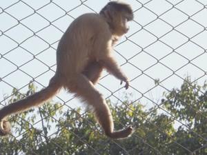 Animal ganhou peso e melhorou mobilidade (Foto: Alan Schneider / G1)