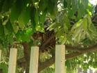 'Achei que fosse onça', diz morador que viu jaguatirica na frente de casa