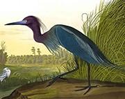 The Birds of America (Foto: Divulgação)