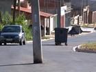 Motoristas fazem zigue-zague para desviar de postes no meio de rua