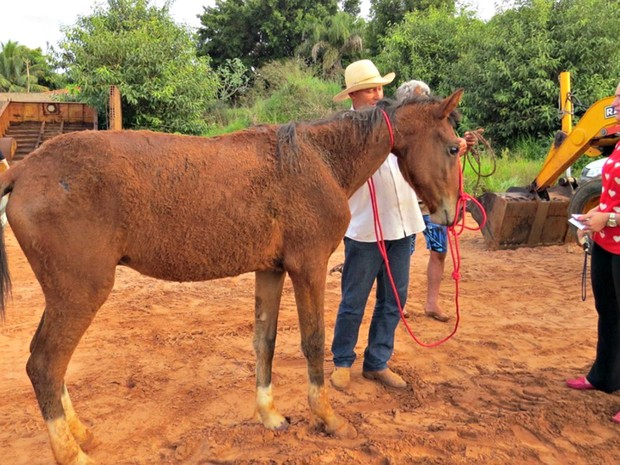 Marciléia acompanhou o resgate do cavalo com o irmão e dono ainda é procurado (Foto: Rodrigo dos Santos/Rádio 90 FM)