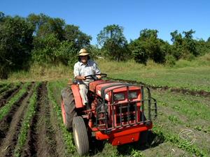Imigrantes investiram na zona rural de Porto Real (Foto: Reprodução/TV Rio Sul)