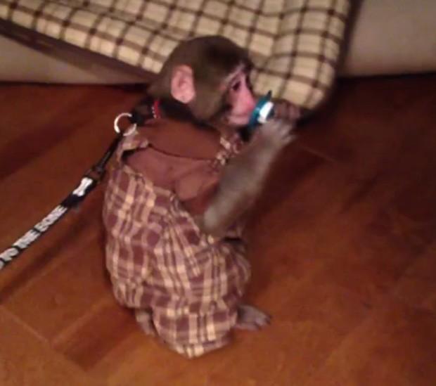 Darwin é visto vestindo roupa xadrez em vídeo (Foto: Reprodução)