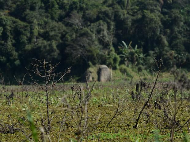 Vegetação encobre área onde antes havia água na Represa de Biritiba-Mirim (Foto: Maiara Barbosa/ G1)