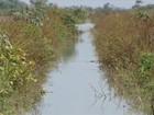 Tocantins ocupa o terceiro lugar na produção de arroz irrigado do país