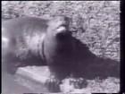 Salvo em fosso de ariranha há 39 anos no DF é preso em ação da PF