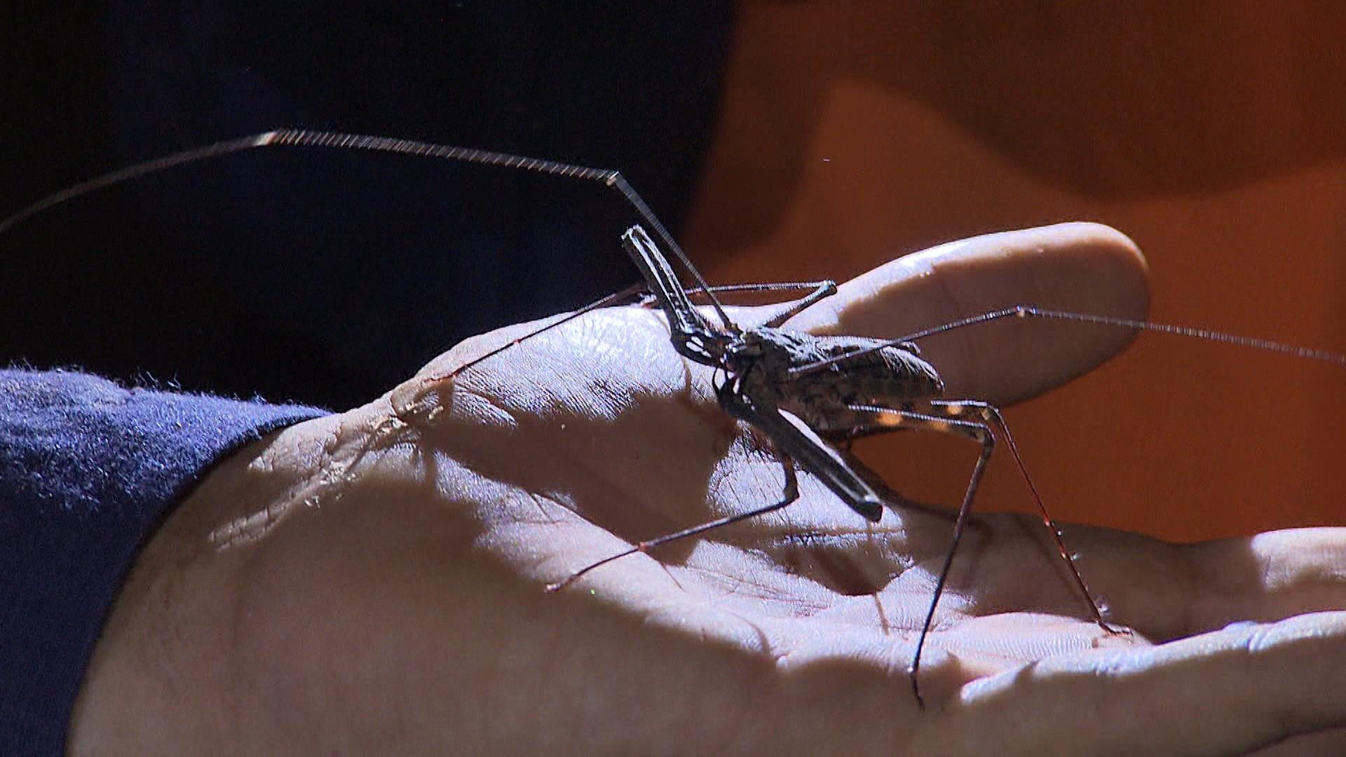 Na Toca do Angico é possível encontrar aranha famosa do filme 'Harry Potter' (Foto: Divulgação)