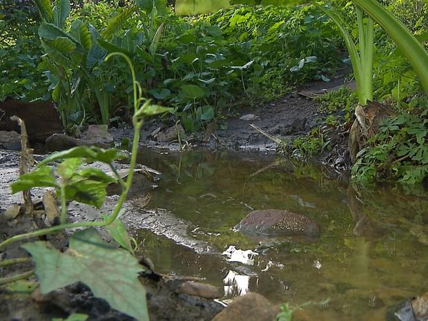 Açudes que devem receber as águas do Rio São Francisco na Paraíba também recebem esgoto (Foto: Wellington Campos/TV Cabo Branco)