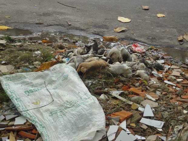 Corpos de gatos e cães mortos foram encontrados perto de um saco. (Foto: Stephanie Carvalho/ G1)