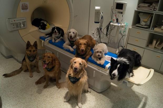Cientistas analisaram atividade cerebral de 13 cachorros (Foto: Borbala Ferenczy/MR Research Center/AP)