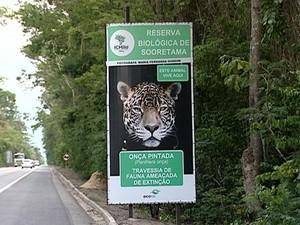 Trecho da Reserva Biológica de Sooretama tem registros de animais atropelados (Foto: Reprodução/ TV Gazeta)