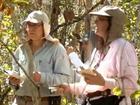 Metade das árvores da floresta amazônica está ameaçada, diz estudo