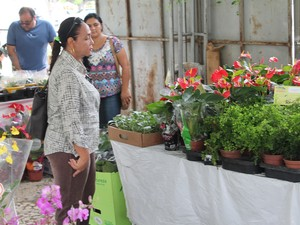 Público procura principalmente por flores decorativas (Foto: Yuri Matos/G1)