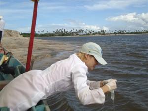 Equipe faz estudo e avaliação dos contaminantes (Foto: Divulgação/Viva o Peixe-boi Marinho)