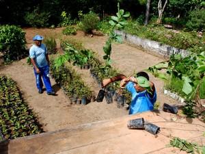 Mudas estão guardadas no Horto Municipal (Foto: Jeferson Hermida/Divulgação)