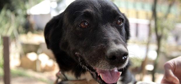 Cachorro atendido pela ONG Clube dos Vira-Latas, em Ribeirão Pires, na Grande São Paulo (Foto: divulgação)