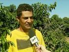 Consequências da seca preocupam quem cultiva café em Minas Gerais