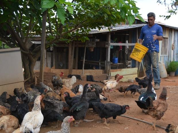 Geraldo tratando das galinhas em sítio que ficava no 'vazio geográfico' (Foto: Eliete Marques/ G1)