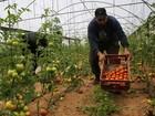 Israel alivia embargo e volta a importar frutas e legumes de Gaza