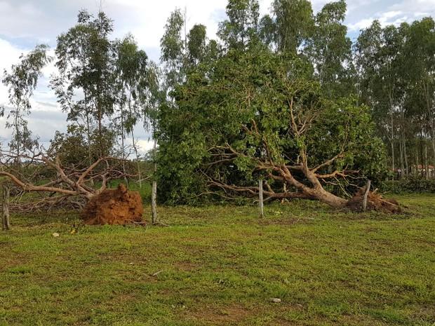 Várias árvores foram derrubadas na cidade (Foto: Prefeitura de São Salvador/Divulgação)