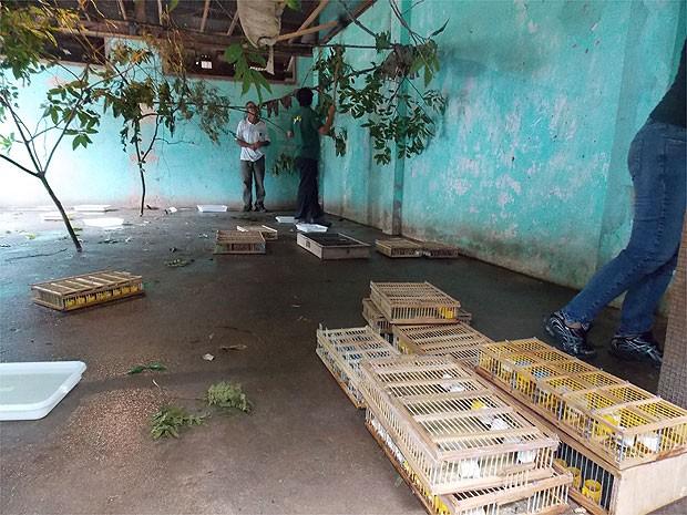 Pássaros foram apreendidos em caixas dentro de carro, em Feira de Santana, na Bahia (Foto: Lílian Marques/ G1)