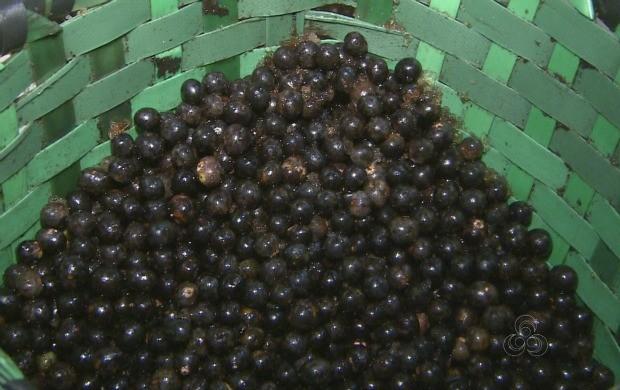 Açaí é considerado a paixão dos amapaenses  (Foto: Amapá TV)