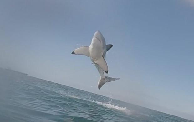 Predador chegou a ficar com o corpo completamento fora da água (Foto: Reprodução/YouTube/White Shark Video)