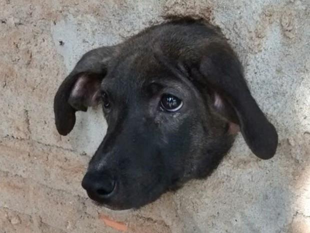 Cachorro ficou com a cabeça presa no buraco do muro (Foto: Divulgação/Corpo de Bombeiros)