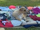 Brechó em Florianópolis reverte dinheiro para animais abandonados