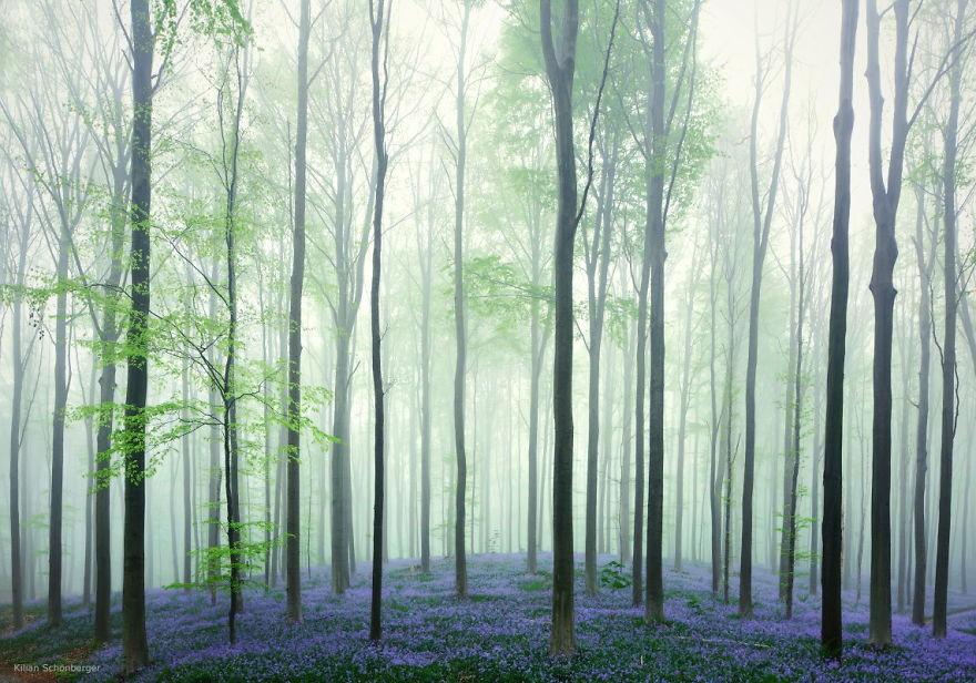 Fotógrafos e florestas (Foto: Kilian Schönberger / Divulgação)