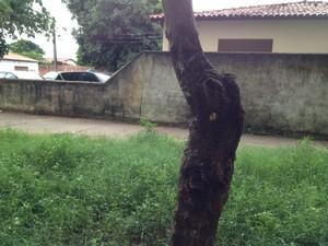 Marcas de balas ficaram nas árvores localizadas próximas ao 8° DP (Foto: Gil Oliveira/G1)