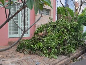 Sem coleta, folhas tomaram calçada e impedem passagem na Rua Salvador Cosso (Foto: Fernanda Testa/G1)