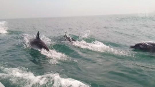Dezenas de golfinhos são flagrados por pescadores no litoral de SP
