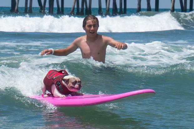 Cães participam de competição de surfe em praia da Califórnia (Foto: Reprodução/Facebook/Unleashed by Petco)