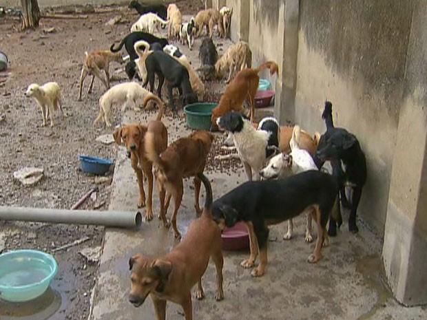Foram encontrados de 50 a 80 cachorros na casa, no Recife (Foto: Reprodução/TV Globo)
