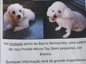 Caso cachorra Juiz de Fora (Foto: Marina Proton/G1)