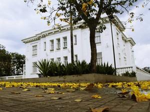 Flores caídas do Ipê formam um tapete amarelo em frente o Palácio Rio Branco (Foto: Val Fernandes/Arquivo pessoal)