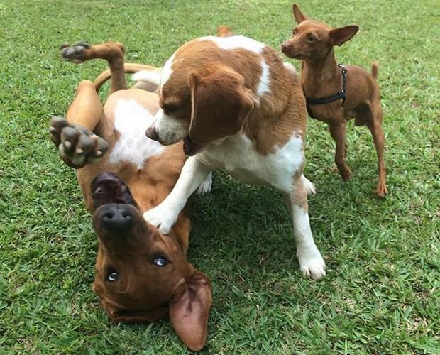 Zezo, Magoo e Eduardo: filhos caninos da apresentadora Fernanda Lima (Foto: Arquivo pessoal)