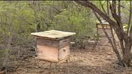 Chuva deve melhorar produção de mel no sertão