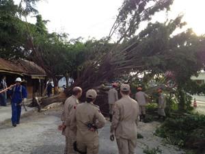 Árvore caiu e interrompeu avenida São Paulo, no Bairro dos Estados (Foto: Walter Paparazzo/G1)